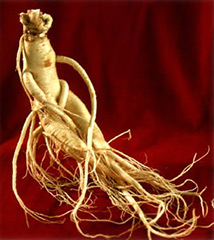 Benefits of Ginseng