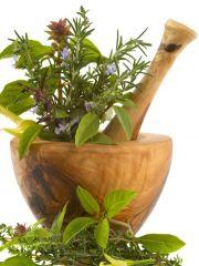 Best Herbs For Immune System Health