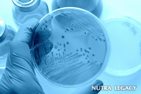 Natural Anti-Bacterial Agents